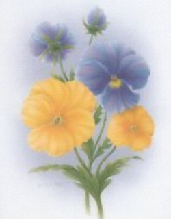 Pansies And Petunias K9 Main Gallery Rob Pohl