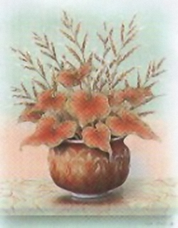 Pot Plants K6 Main Gallery Rob Pohl