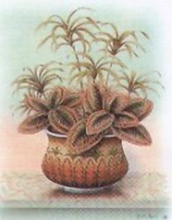 Pot Plants K7 Main Gallery Rob Pohl