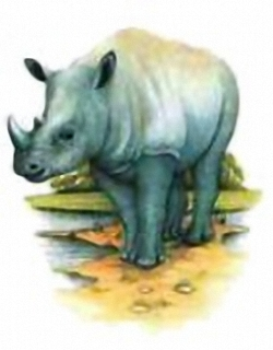 White Rhinoceros A3 Main Gallery David Andrews