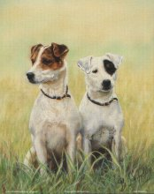JACK RUSSELS L5 Main Gallery B Harding