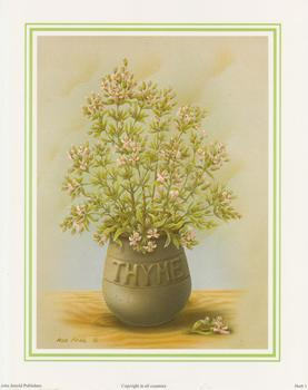 Herb Print 1- THYME by Rob Pohl - 10
