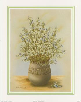 Herb Print 4 - ROSEMARY by Rob Pohl - 10