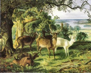 Deer in the Shade by Joseph Denovan Adam - 10