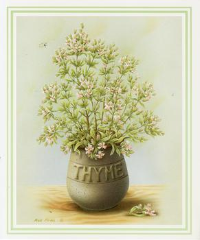 THYME Herb Print ** by Rob Pohl ** 5