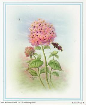 Summer Glory B - by John Arnold - Print Size 5