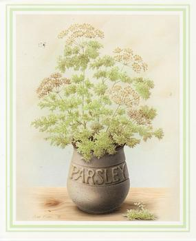 PARSLEY Herb Print ** by Rob Pohl ** 5