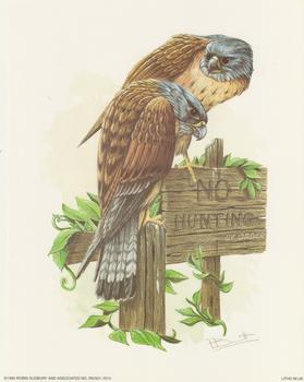 LIMITED STOCK - Birds of Prey/Owls - No Hunting - Robin Sudbury 10