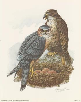 LIMITED STOCK - Birds of Prey/Owls - Robin Sudbury 10