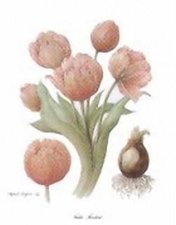 Tulip FireBird E5 Main Gallery Alfred Sagan