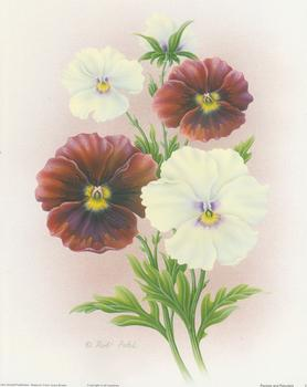 Pansies and Petunias Print C  - 10