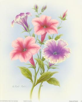 Pansies and Petunias Print B  - 10