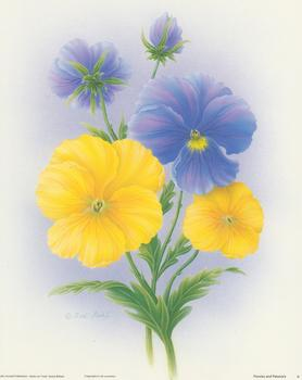 Pansies and Petunias Print A  - 10