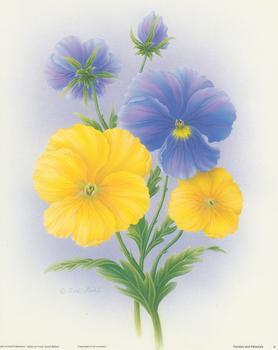 Pansies and Petunias Print A  - 10