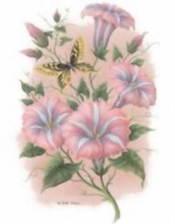 Pink Mists Ipomoea 10