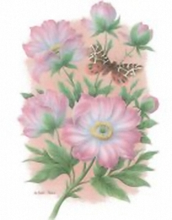Pink Mists Peonies 10