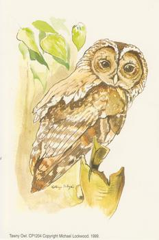 PACK OF 5 - Tawny Owl A Michael Lockwood Print - CP1024 4