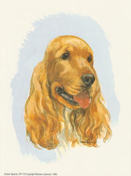 PACK OF 5 - Cocker Spaniel Dog CP1173 - by Michael Lockwood -