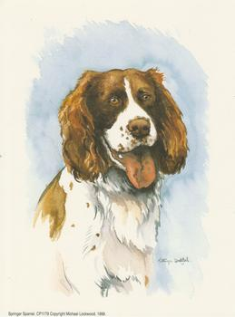 PACK OF 5 - Springer Spaniel Dog CP1179 - by Michael Lockwood -
