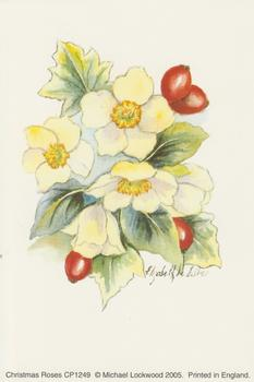 PACK OF 5 - Christmas Roses - CP1249 - 4