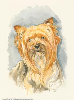 PACK OF 5 - Yorkshire Terrier Dog CP1180 - by Michael Lockwood . -