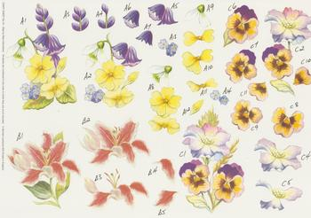 PACK OF 5 - Heartsease , Lillies , Bluebell & Pansies  Step by Step Sheet No 10 -Jacksons mail Order