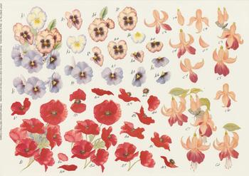 Pack of 5 x Pansie Poppy and Fuchsia by Michael Lockwood Craft Sheet No 72 . -Jacksons mail Order
