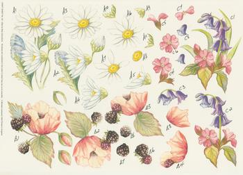 PACK OF 5 ***Campion & Bluebell , Oxeye Daisy and Blackberry Flowers by Michael Lockwood Craft Sheet No 20 . -Jacksons mail Order