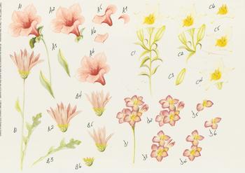 PACK OF 5 ****Craft Sheet No 25 ***Flowers***by Michael Lockwood . Jacksons