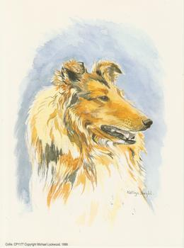 PACK OF 5**** Collie Dog by Kathryn Dalziel Print CP1177 Kathryn Dalziel