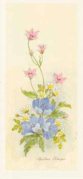 PACK OF 5 *** Spring Flowers 1 with Blue Flowers by Christine Coleyan . -Jacksons mail Order