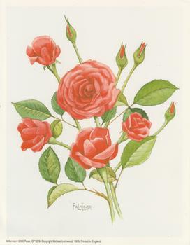 PACK OF 5 *** Millenium 2000 Rose 7