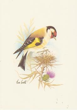 PACK OF 5*** Goldfinch Bird with Purple Flower - Print by Eve Coote *** 5
