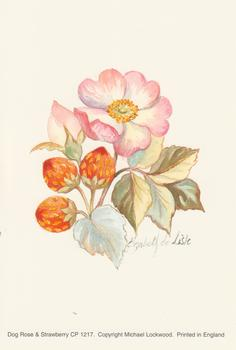 PACK OF 5 **** Dog Rose Flower & Strawberry Fruit - Michael Lockwood Print - CP1217 - 4