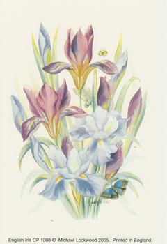 PACK OF 5 **** English Iris  **A Michael Lockwood Print ** 4