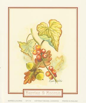 pack of 5 *** Berries and Acorns ~ CP1170 ~ A Elizabeth de Lisle Print - 5