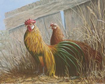 Golden Pheonix Cockerels 10