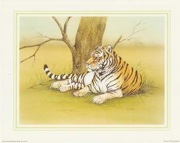 **TIGER**African Wild Animal (C) by J A Pulford 10