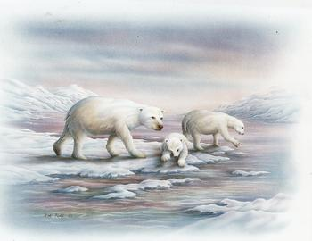 Arctic Life Polar Bears B7 Main Gallery Rob Pohl