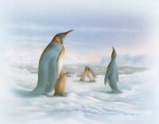 Arctic Life Penguins B8 Main Gallery Rob Pohl