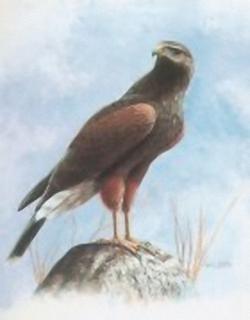 Birds of Prey  B10 Main Gallery M Chester