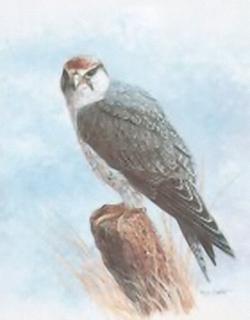 Birds of Prey B1 Main Gallery M Chester