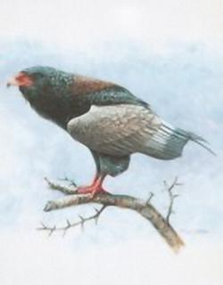 Birds of Prey B2 Main Gallery M Chester