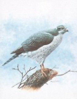 Birds of Prey B3 Main Gallery M Chester