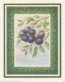 Fruit B - Plums - by Rob Pohl 10