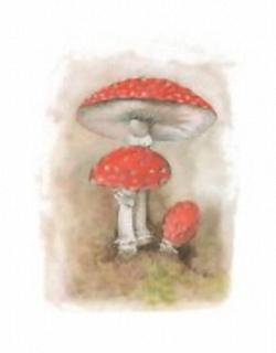 Mushrooms B5 Main Gallery Menzel