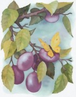 The plums and the butterfly B10 Main Gallery Cornelia Ellinger