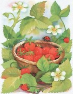 Strawberries B2 Main Gallery Cornelia Ellinger