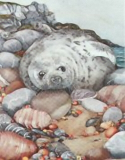The Seal C7 Main Gallery Sheila Mannes Abbot