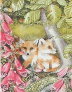 The Foxes C9 Main Gallery Sheila Mannes Abbot